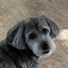 Profile picture of gloria.forsyth